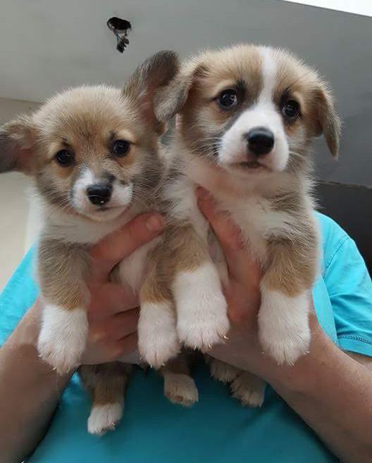 Puppies Zippora