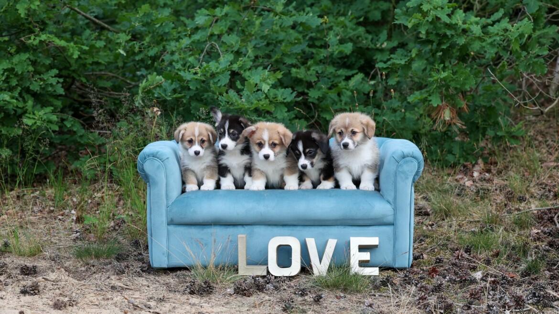 Puppies Angel
